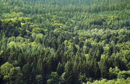 Wald Buldgarien