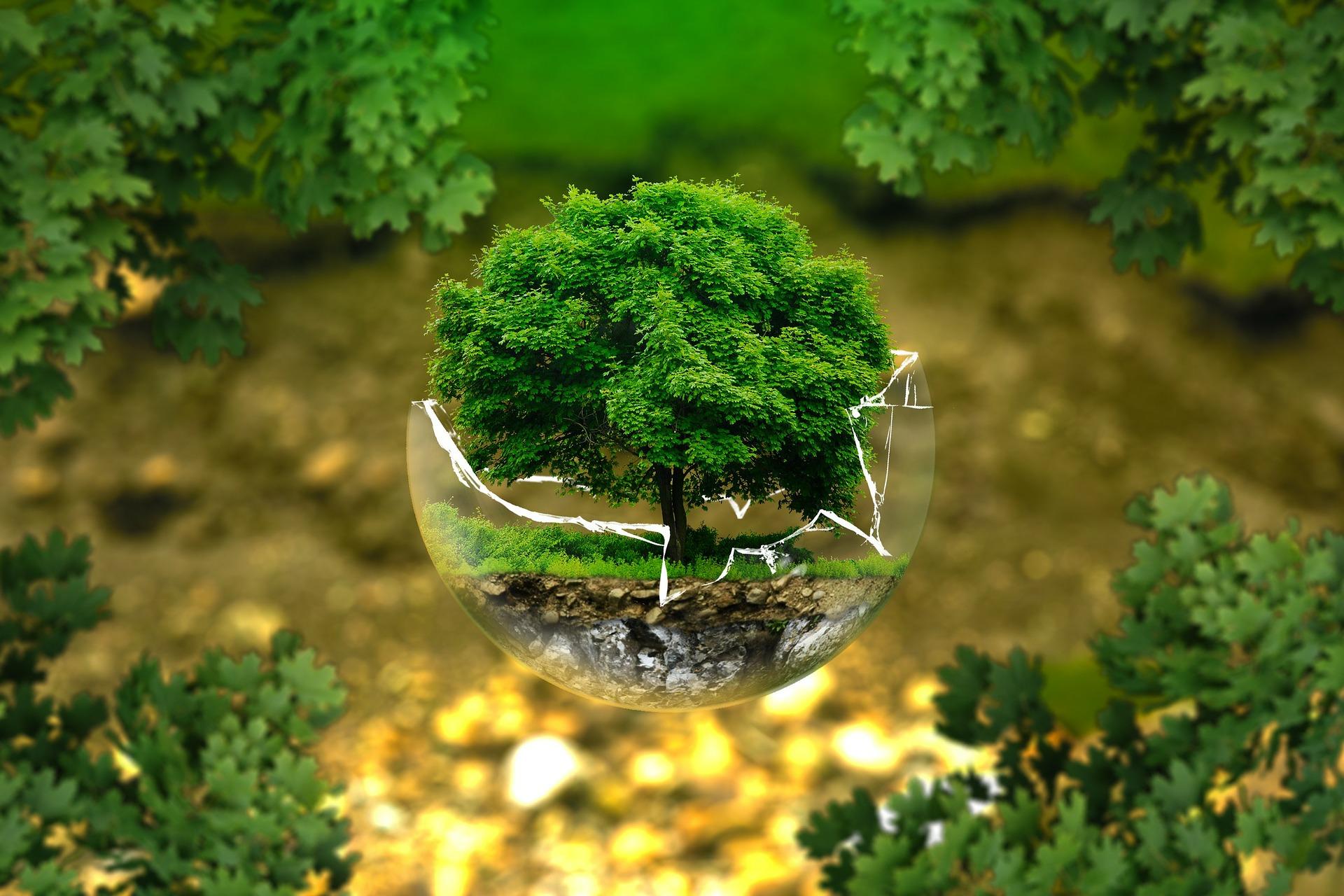 Wachstum der Wälder in Deutschland hervorragend