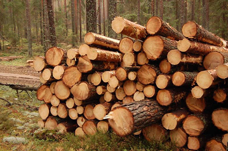 Verbände fordern mehr Holzwärme in Baden-Württemberg